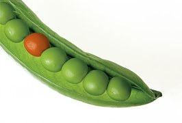 different colored peas-580333__180